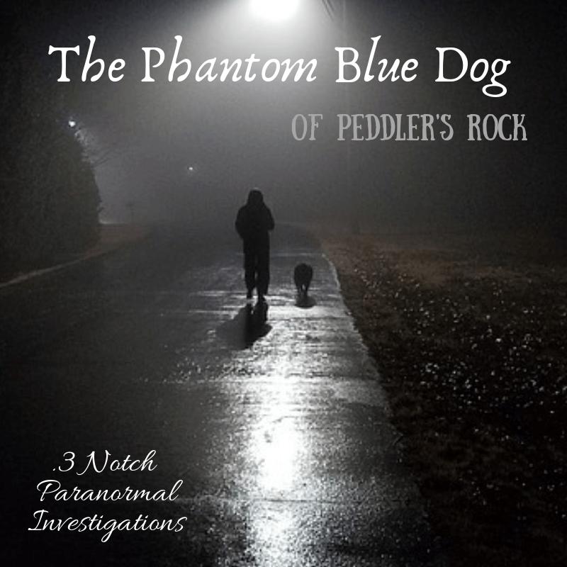 blue dog (1)